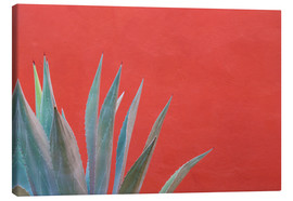 Canvas print  Agave in front of red wall - Don Paulson
