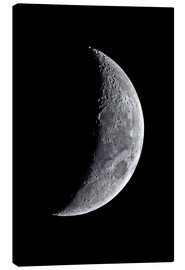 Canvas print  new moon - MonarchC