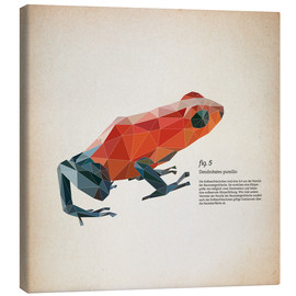 Canvas print  fig5 polygon frog square - Labelizer