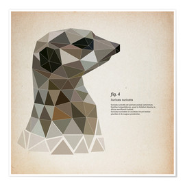 Premium poster  fig4 Polygon meerkat  square - Labelizer