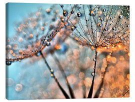 Canvas print  Dandelion reflections - Julia Delgado