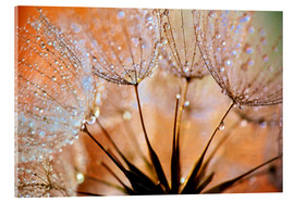 Acrylic print  Dandelion orange light - Julia Delgado