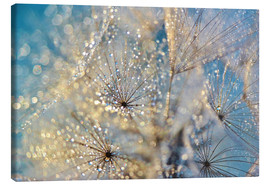 Canvas print  Dandelion Golden Dream - Julia Delgado
