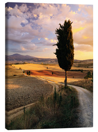 Canvas print  Evening in the Val d'Orcia, Tuscany - Matteo Colombo
