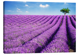 Canvas print  Lavender field and tree - Matteo Colombo