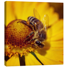 Canvas print  Flowers carousel for bees - Dirk Driesen