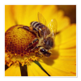 Premium poster  Flowers carousel for bees - Dirk Driesen