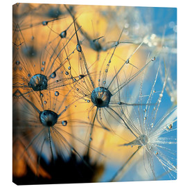 Canvas print  Dandelion with dew - Dirk Driesen