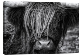 Canvas print  Scottish Highland Cattle - Martina Cross