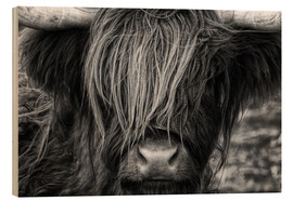 Wood print  Scottish Highland Cattle - Martina Cross