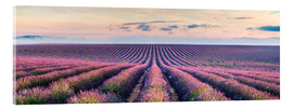 Acrylic print  Lavender field in Provence - Matteo Colombo