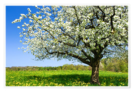 Premium poster  Blossoming trees in spring rural meadow - Peter Wey