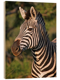 Wood print  Zebra in Africa, wildlife - wiw
