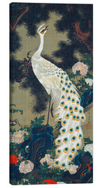 Canvas print  A white peacock under a pine tree - Itô Jakuchu