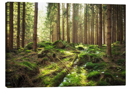 Canvas print  Spring awakening in the forest - Oliver Henze