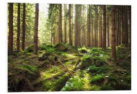 Foam board print  Spring awakening in the forest - Oliver Henze