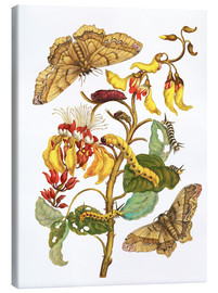 Canvas print  Coral tree and silkworm - Maria Sibylla Merian