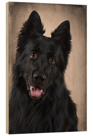 Wood print  German Shepherd 1 - Heidi Bollich