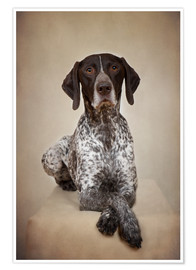 Premium poster  German shorthaired pointer / 1 - Heidi Bollich