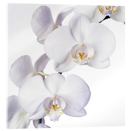Acrylic print  Orchid flowers - Johnny Greig