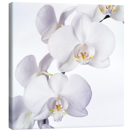 Canvas print  Orchid flowers - Johnny Greig