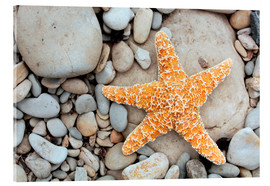 Acrylic print  Starfish on a beach - Tony Craddock
