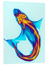 Foam board print  Shark - D. Roberts