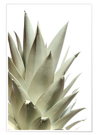 Premium poster  White pineapple - Neal Grundy