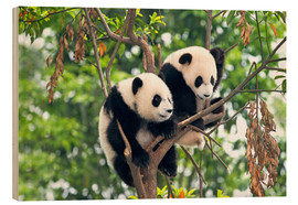 Wood print  Young Pandas in a Tree - Tony Camacho