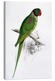 Canvas print  Hooded Parakeet - Edward Lear