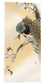Acrylic print  A peacock in a cherry tree crown - Ohara Koson