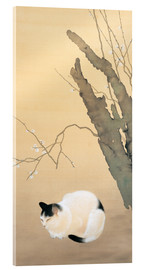 Acrylic print  Cat and Plum Blossoms - Hishida Shunso