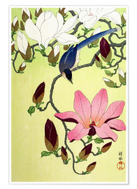 Premium poster  Magpie with Pink and White Magnolia Blossoms - Ohara Koson