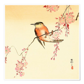 Premium poster  Red bird and cherry blossom - Ohara Koson