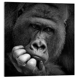Acrylic print  Thoughtful Gorilla - Antje Wenner-Braun