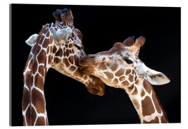 Acrylic print  The kiss - Manfred Foeger