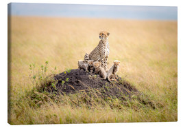 Canvas print  Leopard mother - Ted Taylor