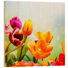Wood print  Tulips with Water Drops - Lichtspielart