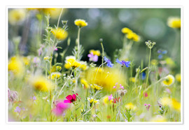 Premium poster Summer Meadow with blooming wild Flowers