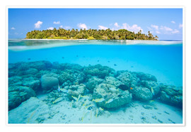 Premium poster  Reef and tropical island, Maldives - Matteo Colombo