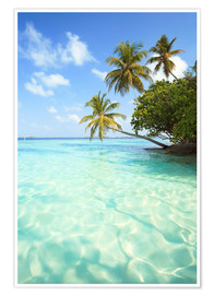 Premium poster  Turquoise Sea and Palm Trees, Maldives - Matteo Colombo