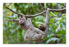 Premium poster  Brown-throated sloth with baby - Jim Goldstein