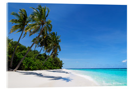 Acrylic print  Deserted palm beach, Maldives - Martin Child