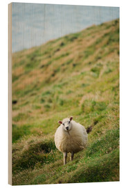 Wood print  Thick sheep, Heimaey Island - Christian Kober