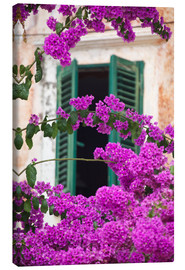 Canvas print  Shuttered window and blossom - Frank Fell