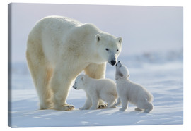 Canvas print  Polar bear family, Wapusk National Park - David Jenkins