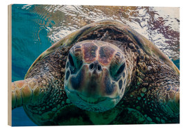 Wood print  Green sea turtle - Michael Nolan