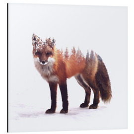 Aluminium print  Fox - Peg Essert