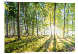 Acrylic print  Forest at sunrise - Hannes Cmarits