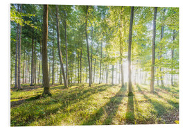 Foam board print  Forest at sunrise - Hannes Cmarits